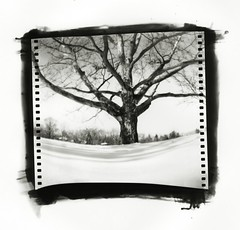 Pinhole: Virginia Park (Matt Callow) Tags: snow tree michigan annarbor pinhole sycamore diafine paintcan sprocketholes panatomicx silverprint virginiapark aerographic
