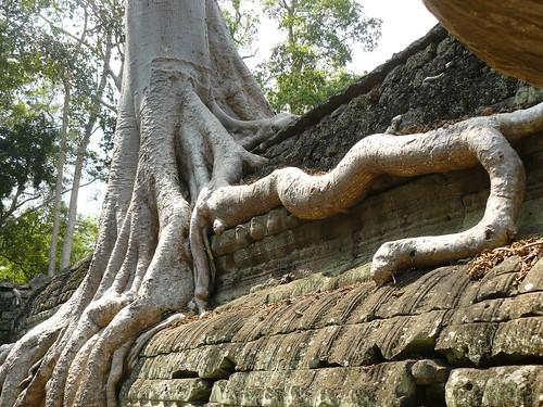 Cambodge - Angkor #81