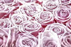 Rose Tinted (Michelle in Ireland) Tags: pink flowers roses floral treatment bunched challengeyouwinner msh1108 msh11082