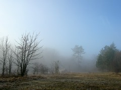 (Linda6769) Tags: wood blue sky cloud mist tree pinetree pine germany town thringen village wolke bluesky jena thuringia battlefield baum blauerhimmel baretree cloudysky conifer wolkig thuringian cloudlesssky schlachtfelder nadelbaum konifere explored cospeda wolkenloserhimmel bewlkterhimmel jenacospeda nackterbaum