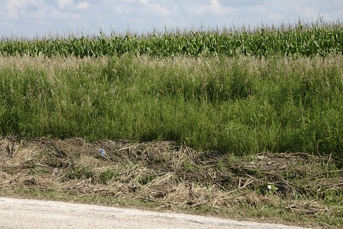 Corn debris in the ditch