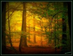 Goldwald - golden forest