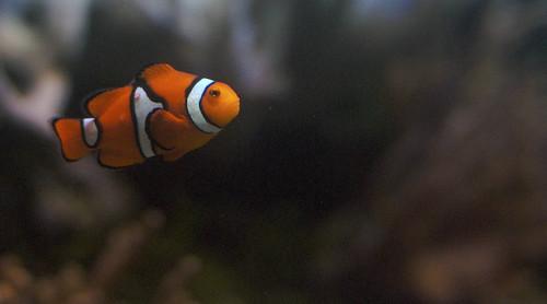 London Aquarium 19.jpg