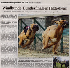 Hildesheimer Allgemeine_18022008_WEB