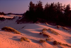 Oregon Sand Dunes Evening (wanderingYew2 (thanks for 5M+ views!)) Tags: film oregon evening scenic national pacificnorthwest oregoncoast sanddune pacificcoast us101 filmscan pacificcoasthighway byway nationalrecreationarea oregoncoasthighway allamericanroad oregonsanddunes unitedstateshighway101
