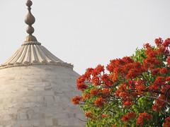 20110423_Taj_Mahal_043