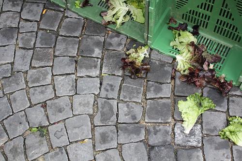 neuchatel market: lettuce casualties