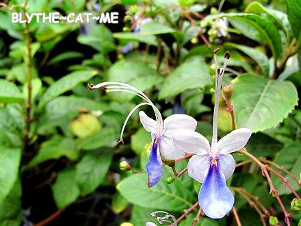 IMG_0217紫蝴蝶