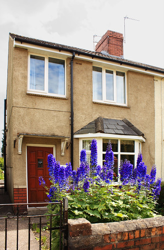 House with delphiniums