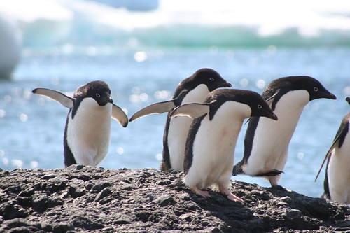 penguins-climate change-Antarctica-decline