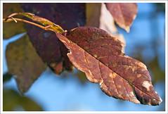 IMG_4262rw (hz536n/George Thomas) Tags: autumn trees fall oklahoma bokeh stillwater 2007 canon30d canonef70200mmf4lusm pse5