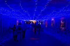Blue christmas (Ramon2002) Tags: switzerland basel explore christmasfair excapture ramon2002
