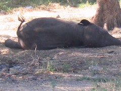 Baby elephant camp 3