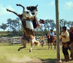 Nortea quente (Eduardo Amorim) Tags: brazil horses horse southamerica brasil caballo cheval caballos bravo cavalos pferde cavalli cavallo cavalo gauchos pferd riograndedosul pampa hest hevonen campanha brsil chevaux gaucho  amricadosul bag fronteira hst gacho  campero amriquedusud  gachos  sudamrica suramrica amricadelsur  sdamerika jineteada   camperos americadelsud gineteada  americameridionale campeiros campeiro eduardoamorim