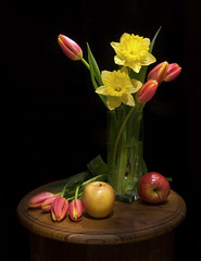Daffodils, Tulips and Apples (Tony Murphy) Tags: ireland stilllife boyle roscommon ruleofthirds fineartphotos tonymurphy daffodilsandtulips spotlighteffects