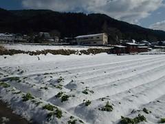 雪の大原 (12)