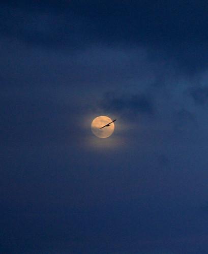 Moonbird 2