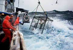 Cold_Storm (coreyfishes) Tags: ocean sea snow color ice dutch weather alaska danger harbor photo fishing fisherman king arnold picture wave crab corey catch kingcrab discovery harsh beringsea crabbing rollo bering snowcrab opilio deadliest deadliestcatch coreyfishes