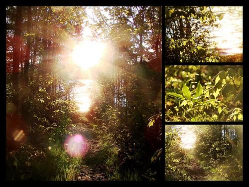 Nature Path Mosaic