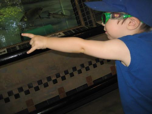 A little boy enjoys an aquarium