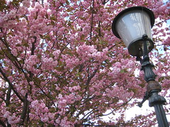 Des arbres en fleurs
