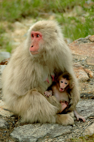 Monkey mom and kid