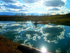 Swimming clouds (peggyhr) Tags: blue trees sky brown sun sunlight white canada water grass sparkles clouds reflections log hills alberta ochre reflexions sheen bushes troutlake musictomyeyes sparklingwater peggyhr flickrbronzeaward bluebirdestates flickridol thedigitographer 100commentgroup thelightpainterssociety dragonflyawards passionforlight naturesprime perfectioninpictures mygearandme artwithoutend lomejordemisamigos ringexcellence blinkagain nossasvidasnossomundoourlifeourworld naturespotofgoldlevel1 royalgrup level1photographyforrecreation bestofblinkwinners redgroupno1 p1290171bp