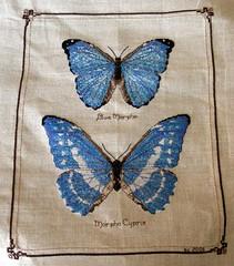 Blue Butterflies (branflakez) Tags: blue butterfly crossstitch needlework butterflies stitches stitching morpho xstitch crosstitch