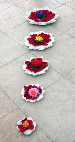 flowers in water at Avighna 011107