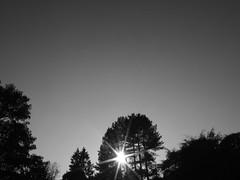 (paulwatson) Tags: city uk trees sunset england blackandwhite sun nature forest photoshop silver grey glow durham cs2 auckland fujifilm bishop s6500fd