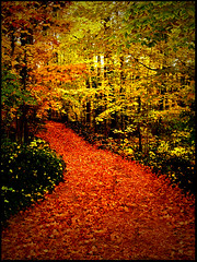 Fallen leaves (Amy V. Miller) Tags: road autumn trees orange green leaves yellow takeabow platinumphoto superbmasterpiece theunforgettablepictures colourartaward platinumphotography worldsbestdazzlingshots goldenmmix irressistablebeauty flcikrslegend