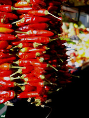hot peppers_closer (]babi]) Tags: red market rosso mercato peperoncini chilipeppers bolzano