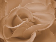 Elegance (what_marty_sees) Tags: flower nature sepia manipulated photofaceoffwinner pfogold