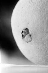 Hemorroides (GLinG GLoMo) Tags: macro blackwhite bn hemorroides