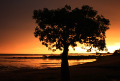 Boab Tree (photographerglen) Tags: sunset orange sun lake tree sunrise canon bay dusk australia 100views 400views 300views 200views 50views westernaustralia broome boab 100comments diamondclassphotographer flickrdiamond 50comments 150comments auselite alemdagqualityonlyclub 20favorite 25favorite
