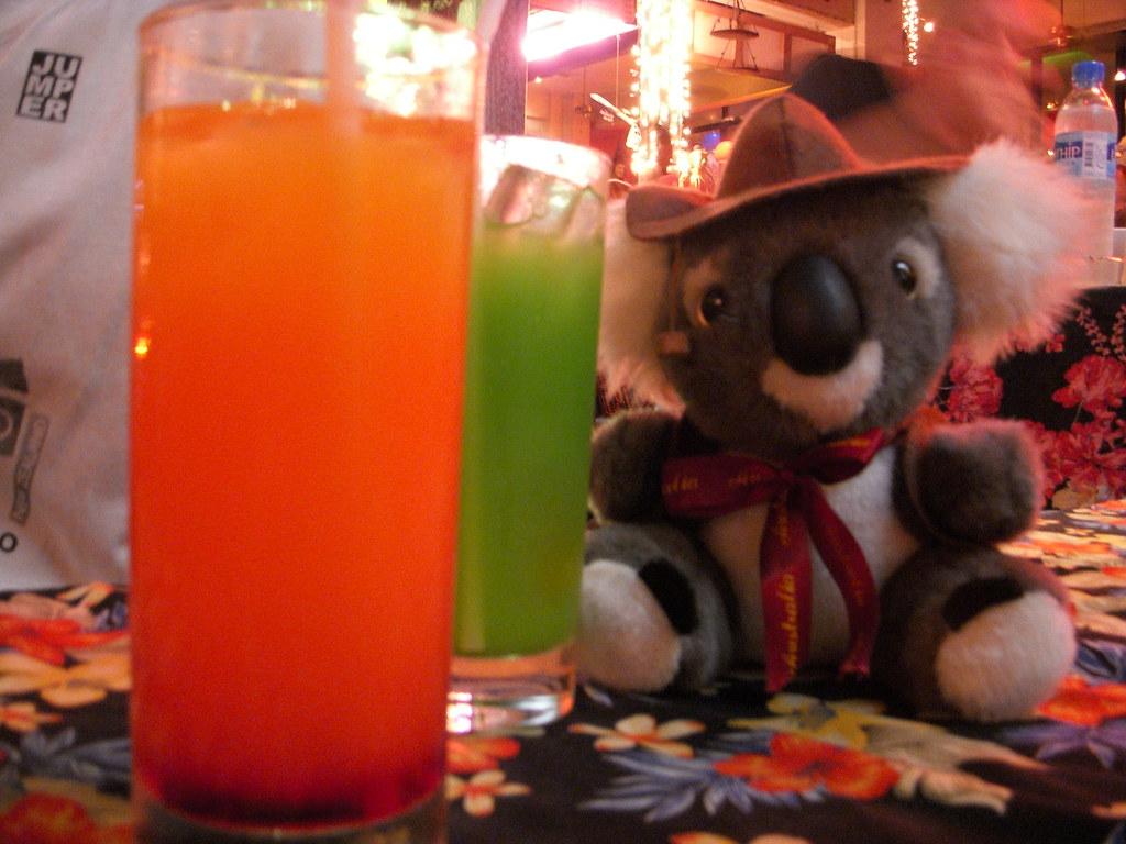 koala con cocktails
