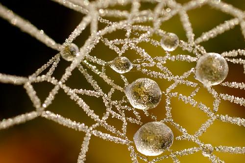 Spider's Jewelry