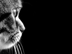 Black & Meow (Lanamaniac) Tags: blackandwhite bw pet baby cute love cat photography photo blackwhite eyes kitten warm soft flickr personal sweet stripes profile innocent young adorable kitty best 45 kitteh meow months cateyes gatto koshka mew cutekitten blueribbonwinner ksenya ksusha project365 persianmix ocfd bestofcats platinumphoto macromonday kotonek goldstaraward kitteneyes llovemypic koshechka llovemypics lanamaniac goldenmasterpiece novavitanewlife lanamaniacphotography ksenya45months
