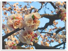 Sign: Spring ...!