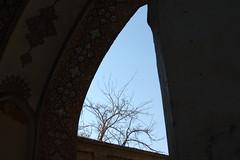 framed tree when raising your eyes (an+dh) Tags: iran fingarden kasahn
