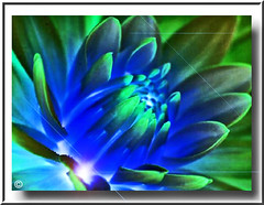 GREEN BLUE GLOW (fantartsy JJ *2013 year of LOVE!*) Tags: flowers blue macro green love nature beauty digital photoshop shiny heart sunday frame collaborative inspire photoart soe breathtaking theblues fantasyart blueribbonwinner fineartphotos anawesomeshot ultimateshot ultimateshots flickrplatinum superbmasterpiece diamondclassphotographer citrit macroaward flickrphotogroup macromix proudshopper theperfectphotographer coloursplosion goldstaraward