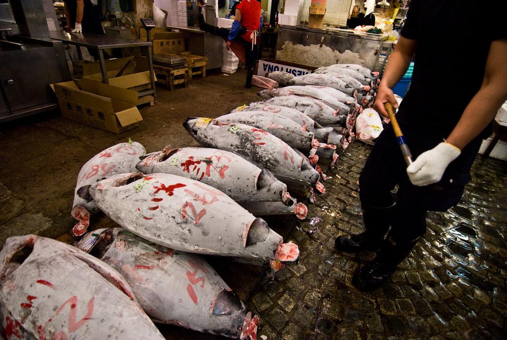 Bluefin Tuna Ban