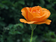 orange!!! (uzair mailk) Tags: orange plants flower macro nature colors beauty top20np aperture dof s5is