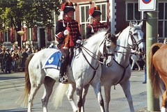 mounted police 37 (nico1959) Tags: police mounted beredenpolitie