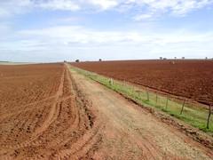 Uma terra fértil (fertile soil)