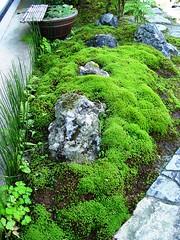 Small Garden in Front of a Gallery Miyazaki, Japan (saimo_mx70) Tags: japan garden moss gallery waterlily stones horsetail echizen tubgarden
