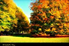 (Elisabeth Gaj) Tags: park autumn trees nature yellow skne natur sverige malm scandynavia elisabethgaj natureselegantshots 100commentgroup bestevercompetitiongroup bestevergoldenartists closedgroup