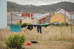 Gato y viento en verano. (www.rojoverdeyazul.es) Tags: autor álvaro bueno españa spain summer verano gato cat ropa clothes viento wind