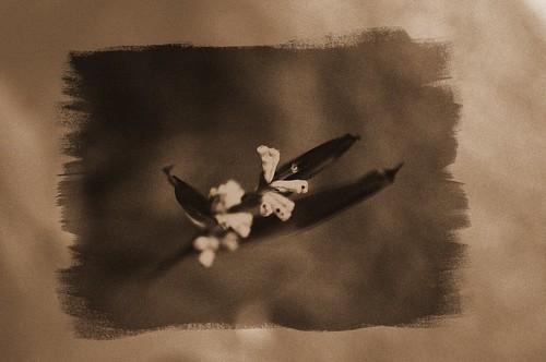 Flowers In Frame