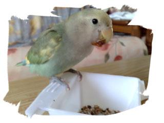 Kiki with her raisin